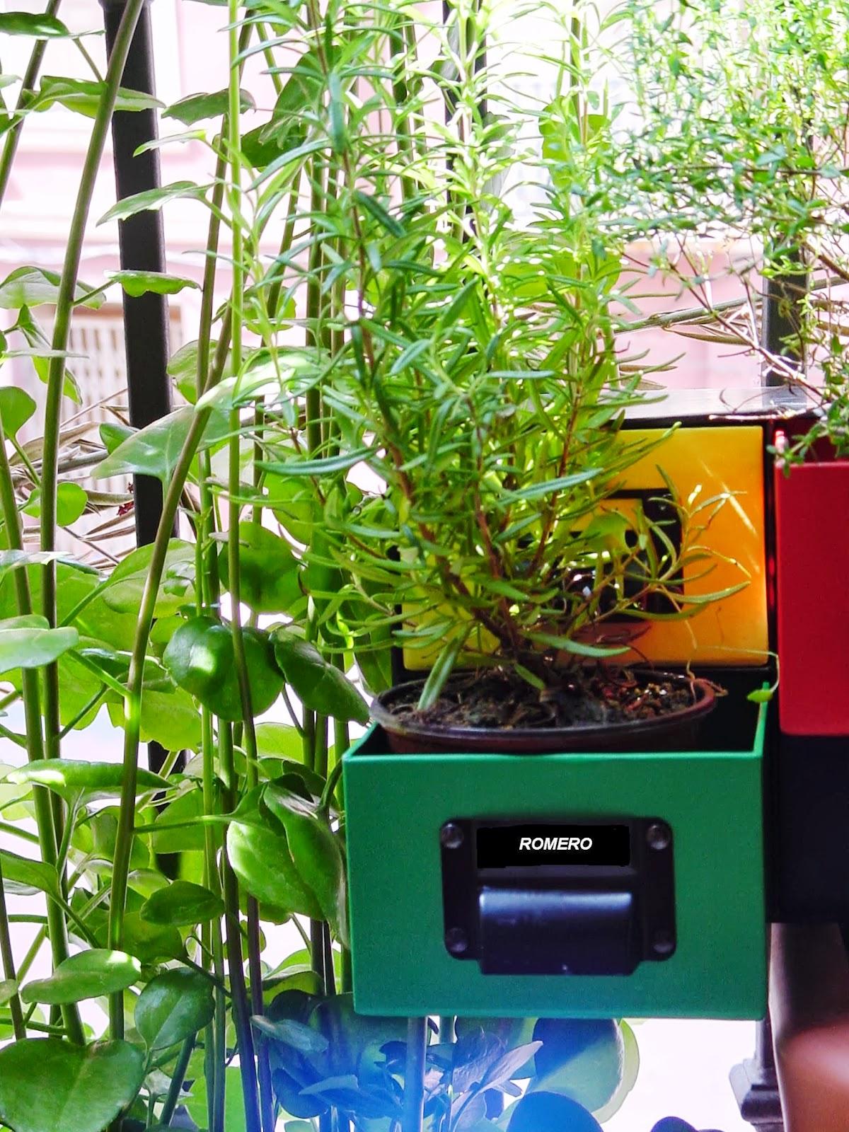 Jardineria eladio nonay romero jardiner a eladio nonay - Jardineria eladio nonay ...