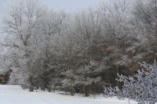 photo of snowy field and forest