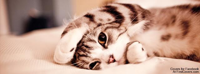 """<img src=""""http://4.bp.blogspot.com/-gI4ZBx43iMU/Ue1eDwMOayI/AAAAAAAACy4/FvnMDKA-gfE/s1600/cute_kitten-3686.jpg"""" alt=""""Animal Facebook Covers"""" />"""