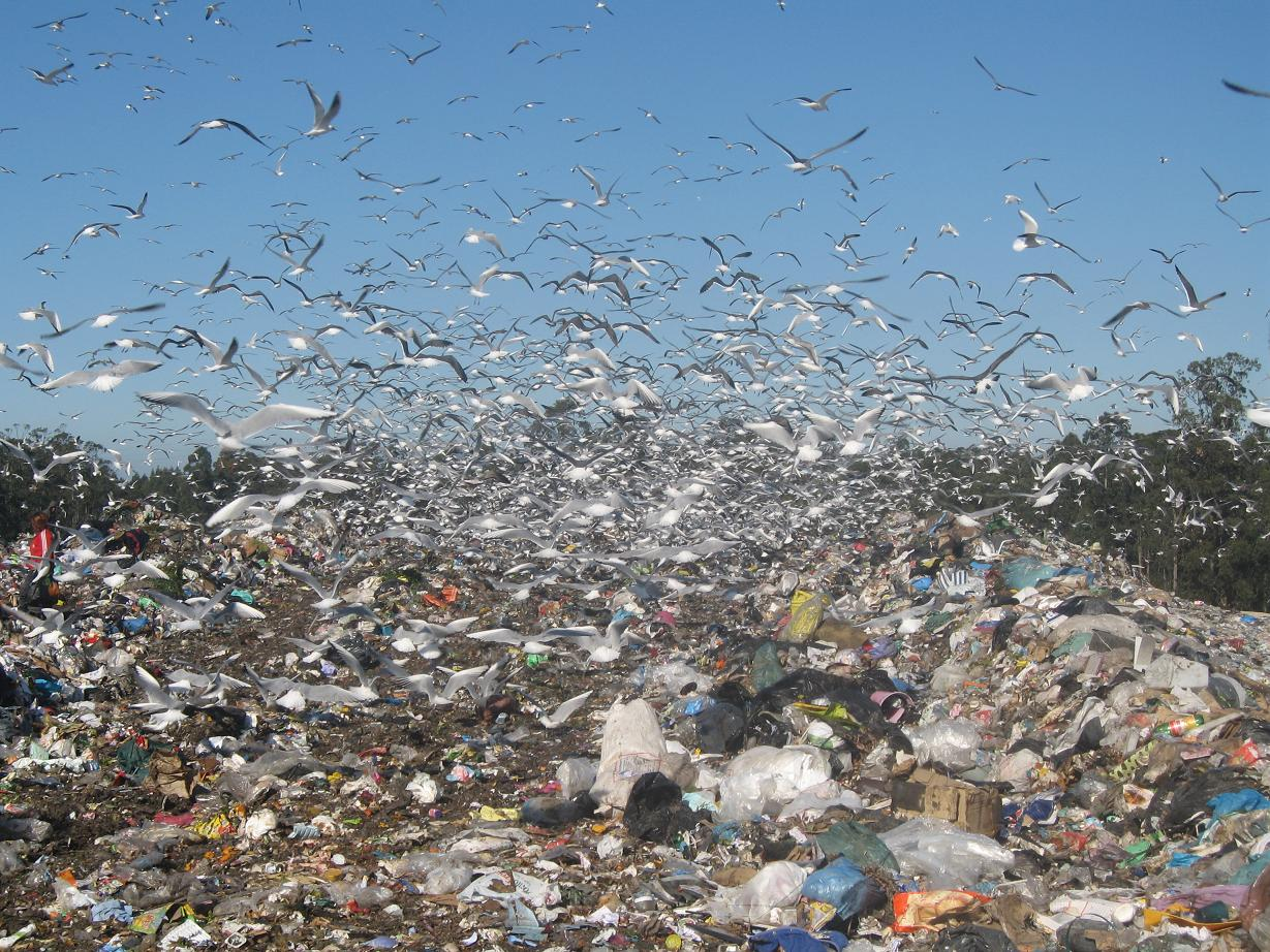 Landfill D 233 Finition What Is