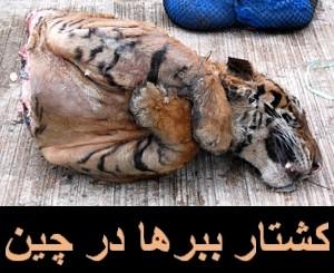 بیست و سه دلیل برای دوستداران حیوانات که چین را تحریم کنند