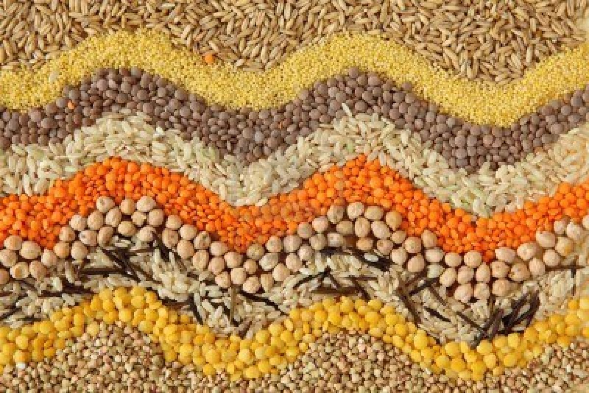 grains_suppliers_egypt