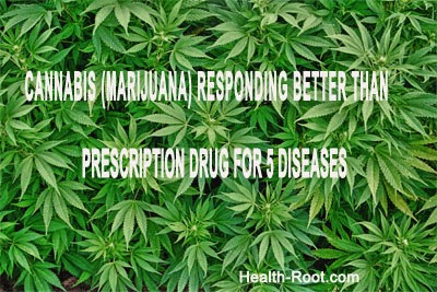 MARIJUANA (CANNABIS) Responding better than Prescription Drug for 5 Diseases