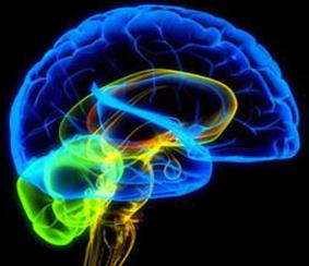 Resultado de imagen de Sinapsis del cerebro humano en imagen GPs
