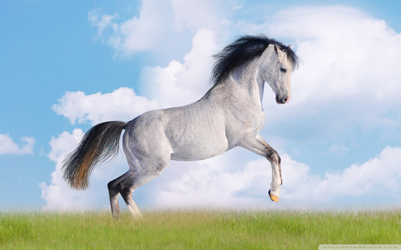 Wonderful   Wallpaper Horse Stunning - 8  Perfect Image Reference_813319.jpg