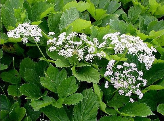 Hierbas medicinales plantas medicinales i j l for Mezclas de plantas medicinales