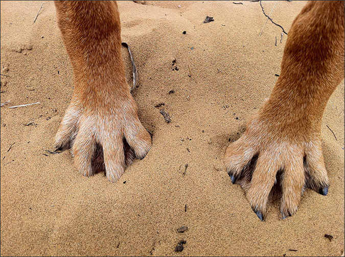Notes from the Pack - a dog blog. Dog paws in the sand.