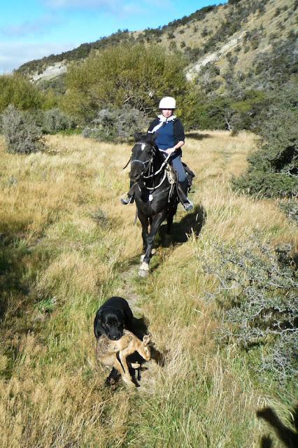 konie na Nowej Zelandii