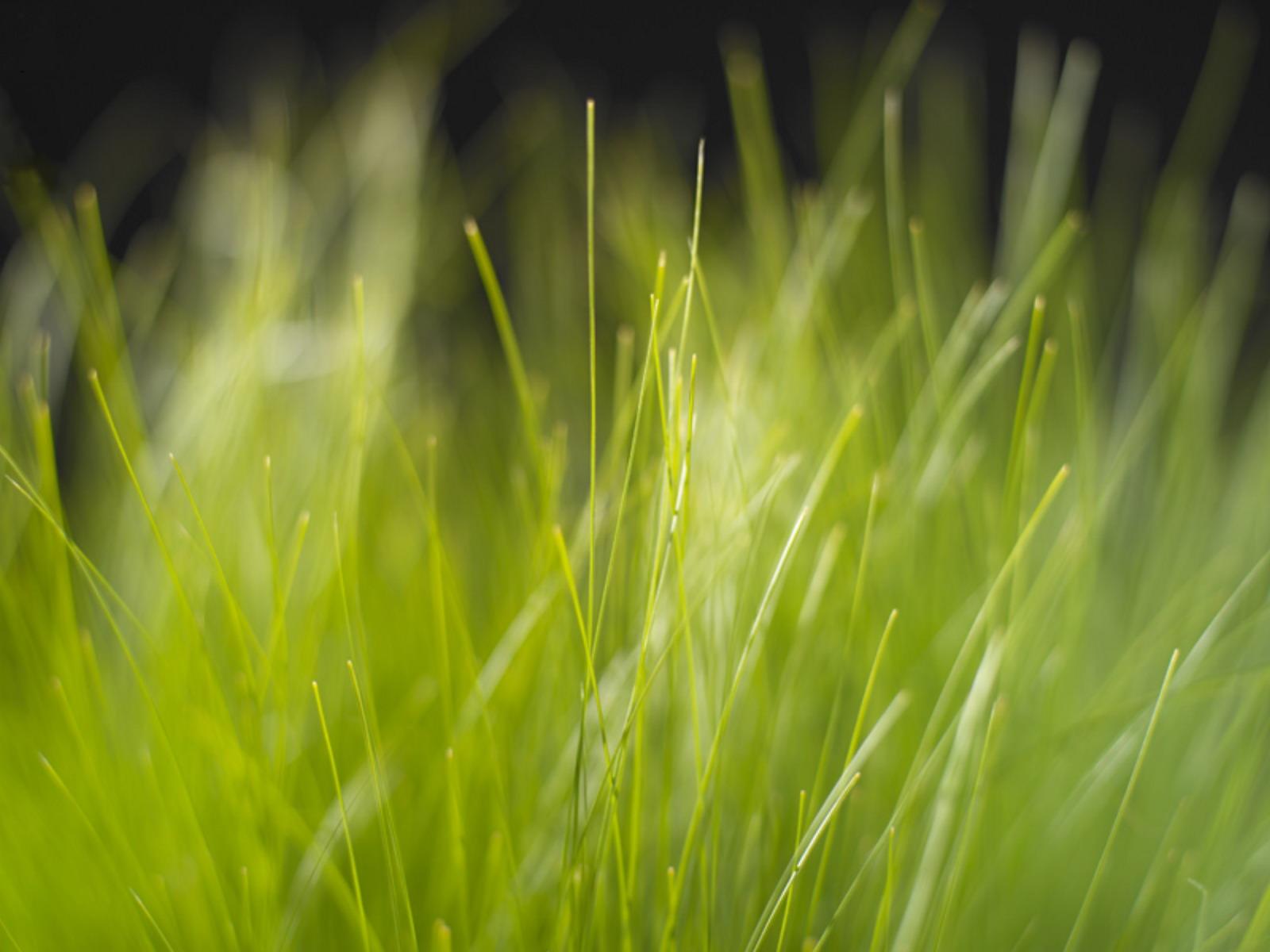 http://4.bp.blogspot.com/-gKoBU8RqiAw/TktVz1drsII/AAAAAAAAA7c/W-whx1-6ZvE/s1600/Grass.jpg