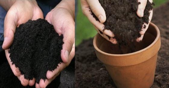 sterilizacija zemlje za cvece