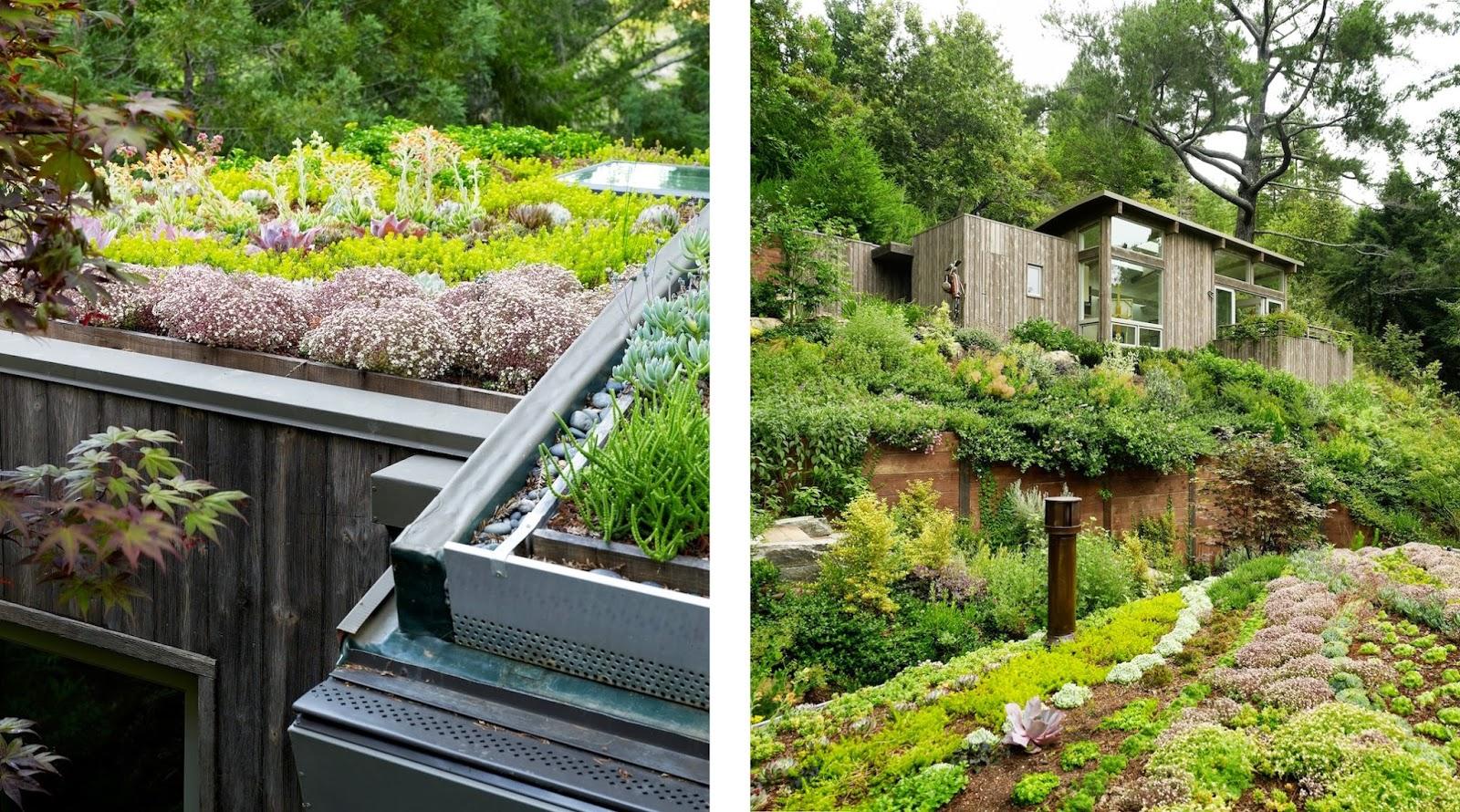 Autoconstrucci n c mo construir una cubierta vegetal - Cubiertas vegetales para tejados ...