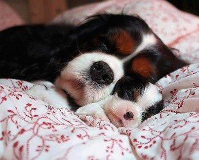 Image result for animals good night