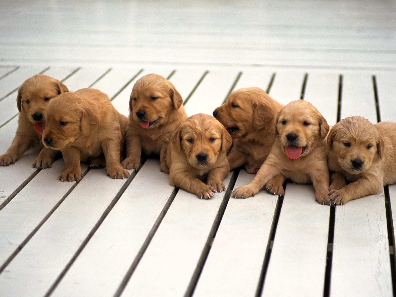 Paquete de 10 fotos de imagenes tiernas esta vez de peque±os y tiernos perros cachorros bastante ternura tienen estos perritos la verdad que son unas