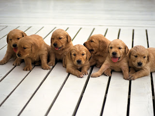 Fotos tiernas perritos