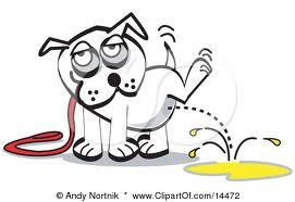cão e o xixi