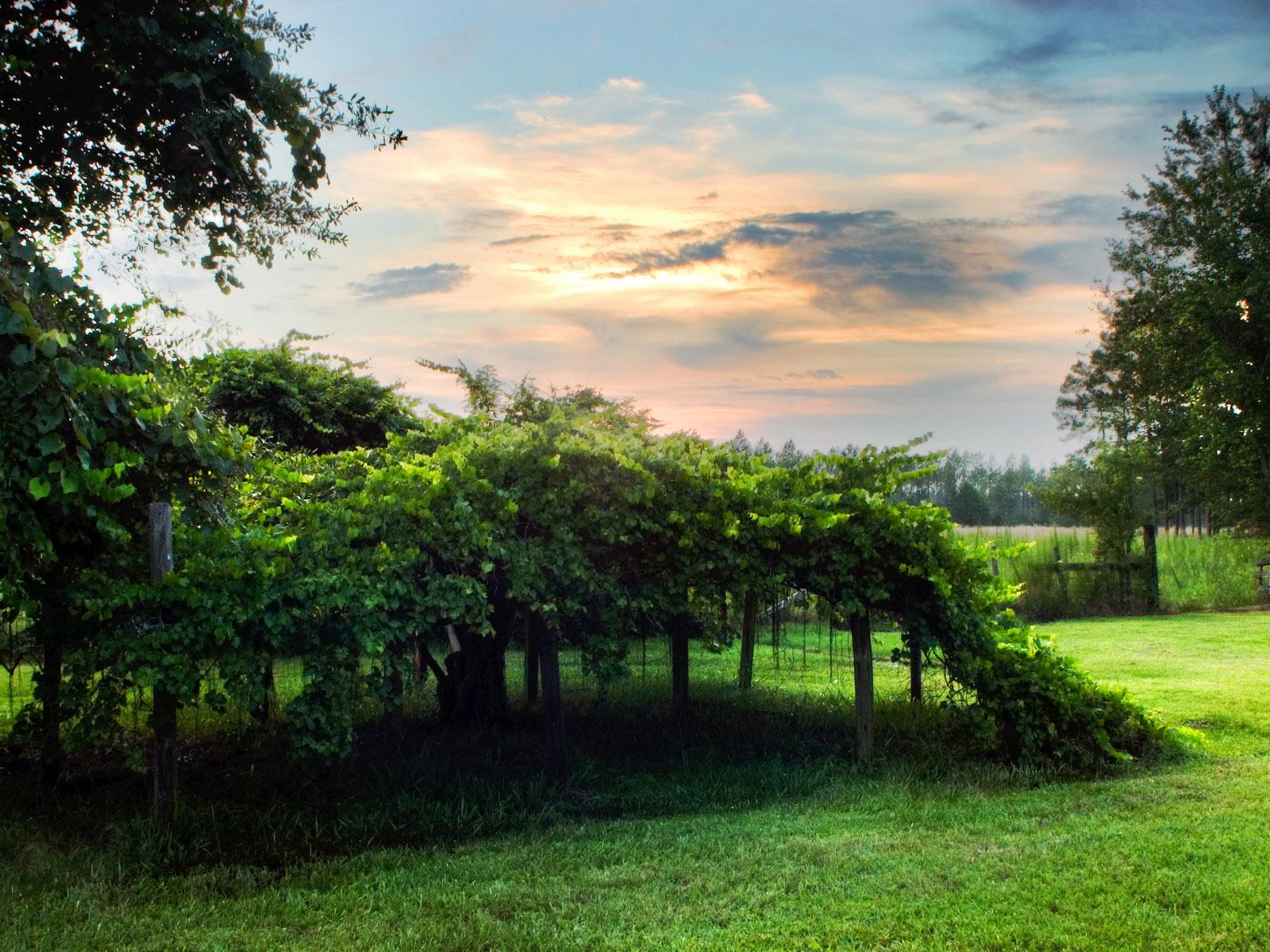 http://4.bp.blogspot.com/-gLsUhPuBYfA/Ta3aMBUo2LI/AAAAAAAAAWA/rVYTDg-lGBY/s1600/natural_scene_1600x1200.jpg