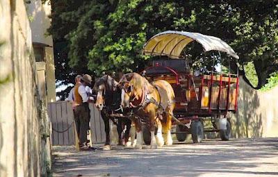 Horse and wagon excursion through Chianti, Tuscany