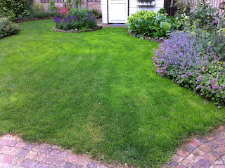 Groen gras, groen gazon