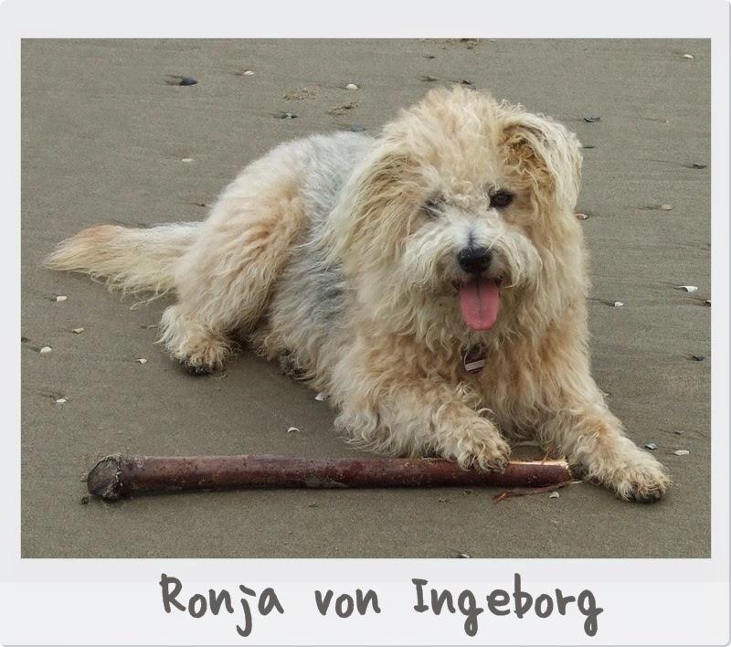 Hund-Ronja von Ingeborg