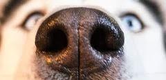 Immer eine gute Nase!