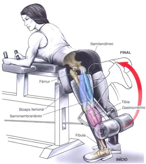 Melhores exerc cios para os gl teos carolinne com s for Exercicio para interno de coxa