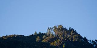 Cerros orientales: eucaliptos al amanecer. Foto: Jorge Bela