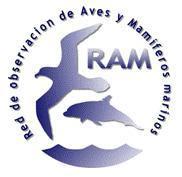 Blog RAM