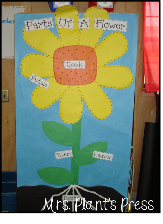 Plants in pictures primary press then each kiddo made their own flower diagram with labelsese cute cupcake liners came from wal mart the cake decorating aisle ccuart Image collections