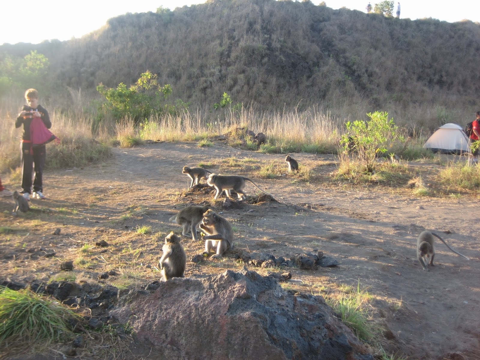 mount-batur-sunrise-trek-monkeys-bali