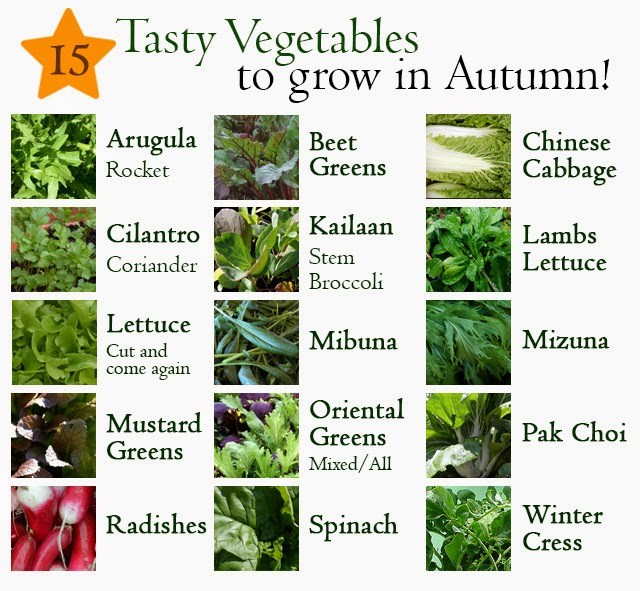 15 Vegetables you can Grow in Autumn - in the garden or containers!