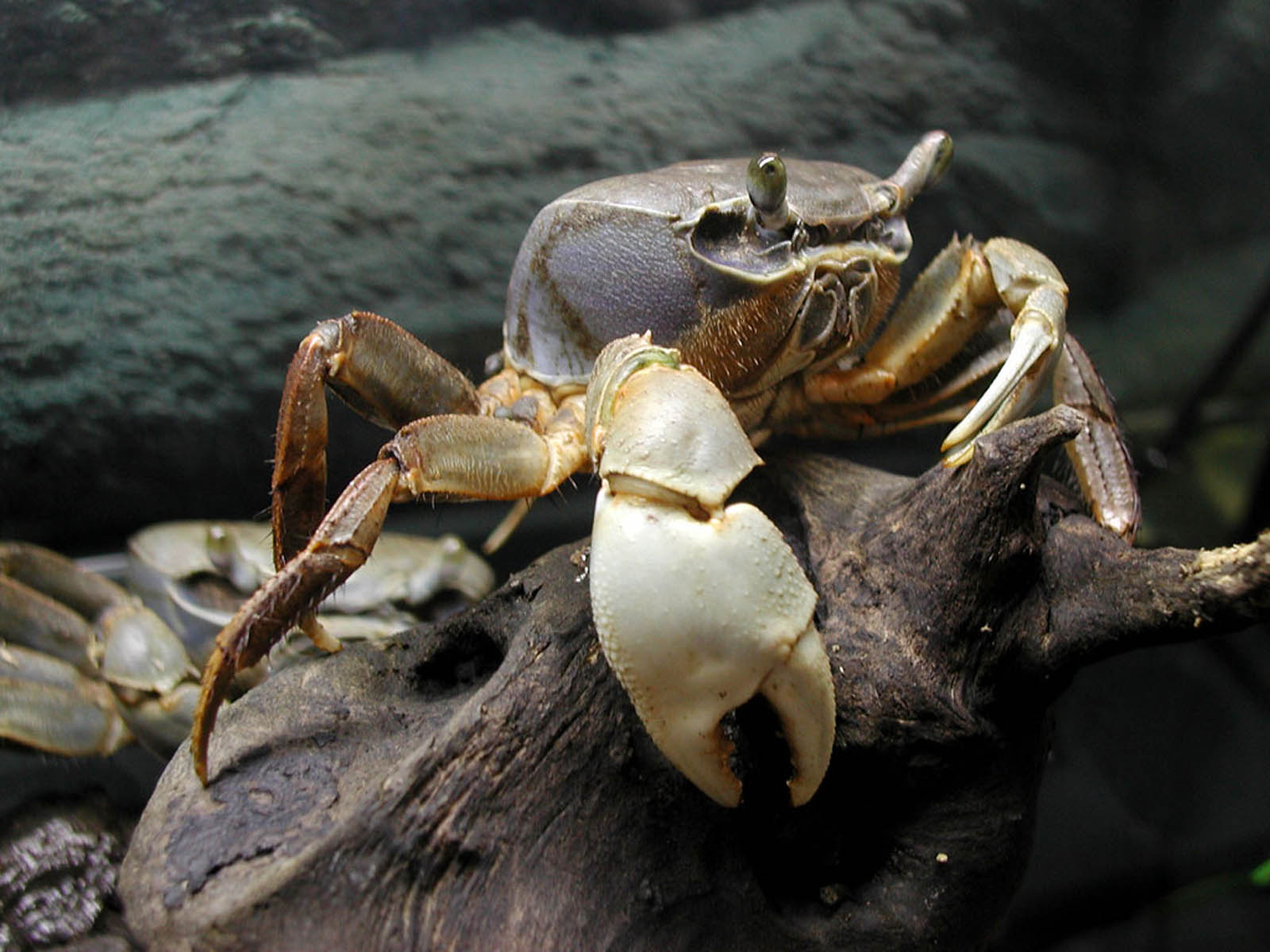 Wallpapers Crab Wallpapers HD Wallpapers Download Free Images Wallpaper [1000image.com]