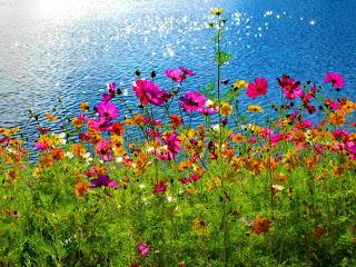 flores al lado del mar  Paisajes de flores