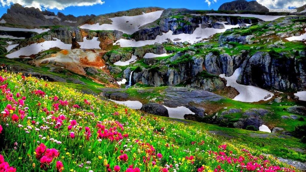 hình nền thiên nhiên hoa cỏ đẹp