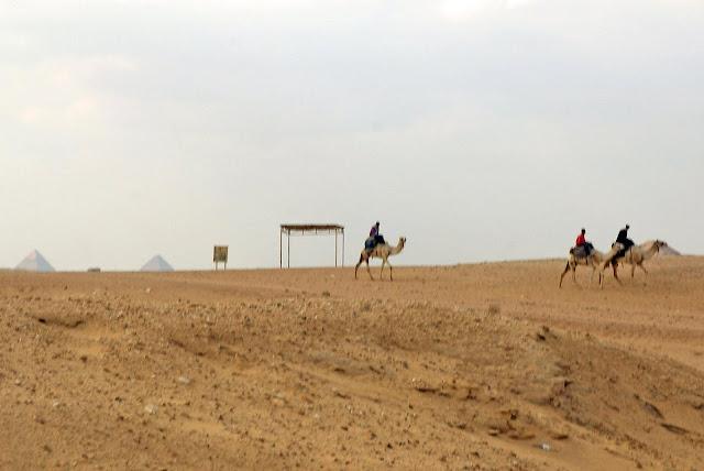 camellos-en-el-desierto