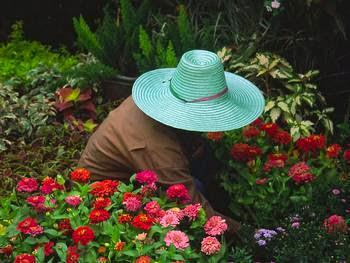Um Vendedor de Flores...