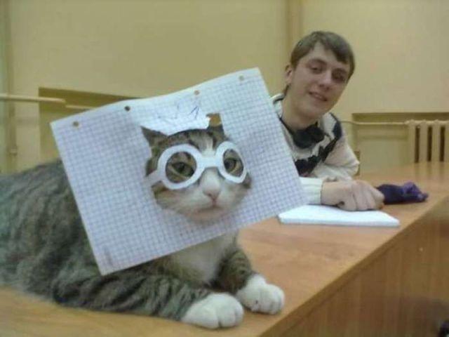 Gatinho de óculos de papel