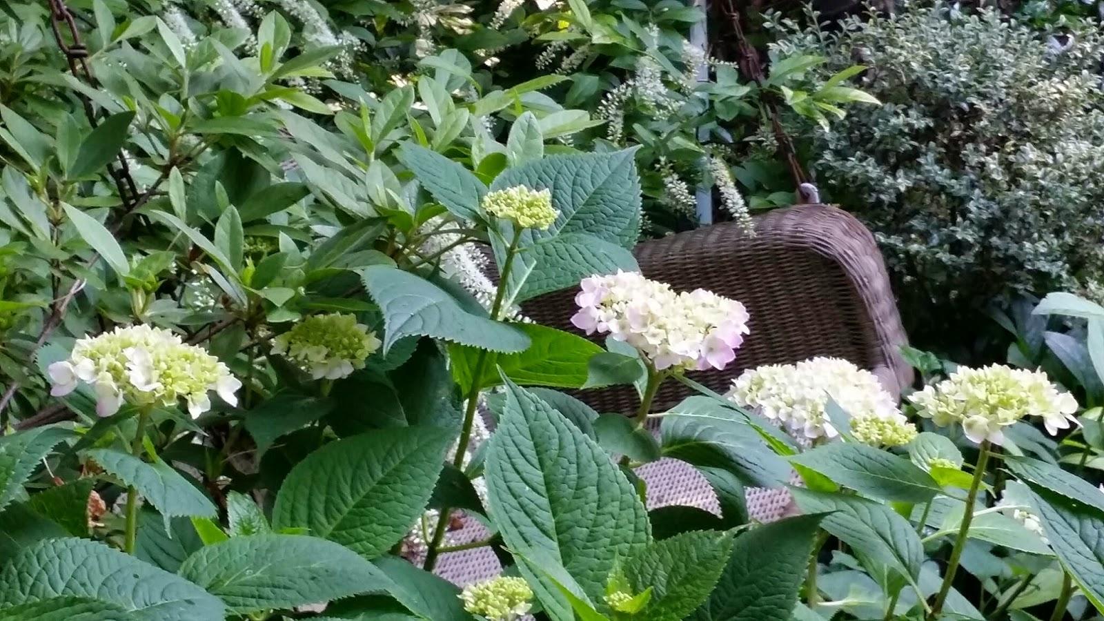 Tara dillard howard 39 s end hydrangeas for Garden designs with hydrangeas