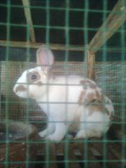 kelinci-13