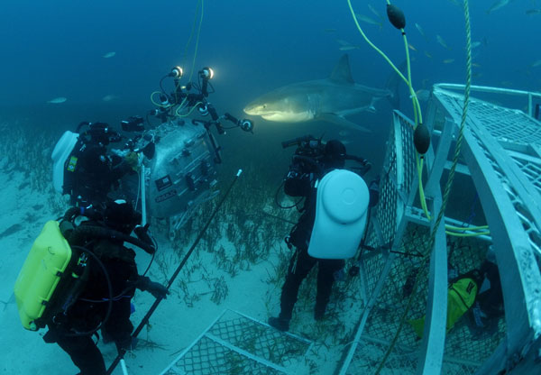 under sea imax shark