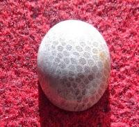 Batu Akik Sarang Tawon Putih