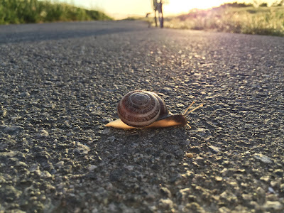 A Snail on the Bay Trail – Life in the Fast Lane