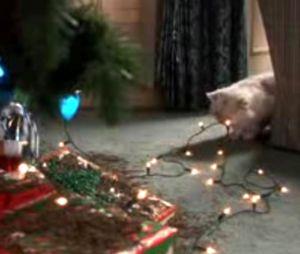 Pet Pourri Holiday Stress Amp Pets