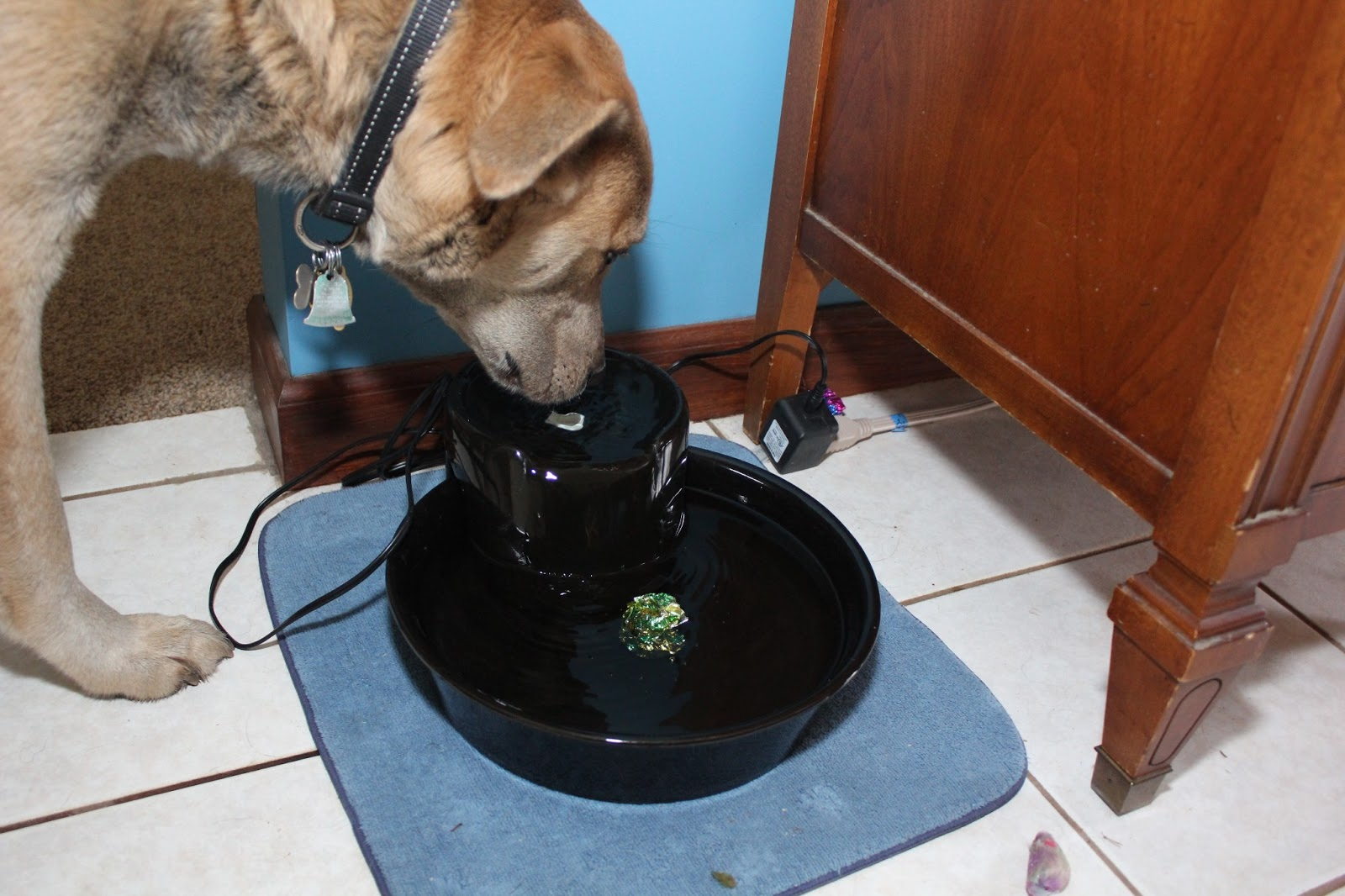 A dog finds a cat toy floating in his water bowl.