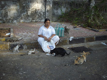 A pack of Feral cats receiving their morning meals.