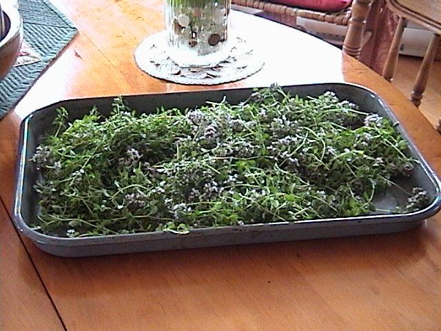 Passion de la courtepointe fleurs fines herbes - Faire secher du thym ...