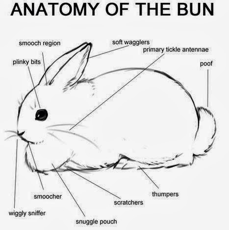 Anatomy of a bunny
