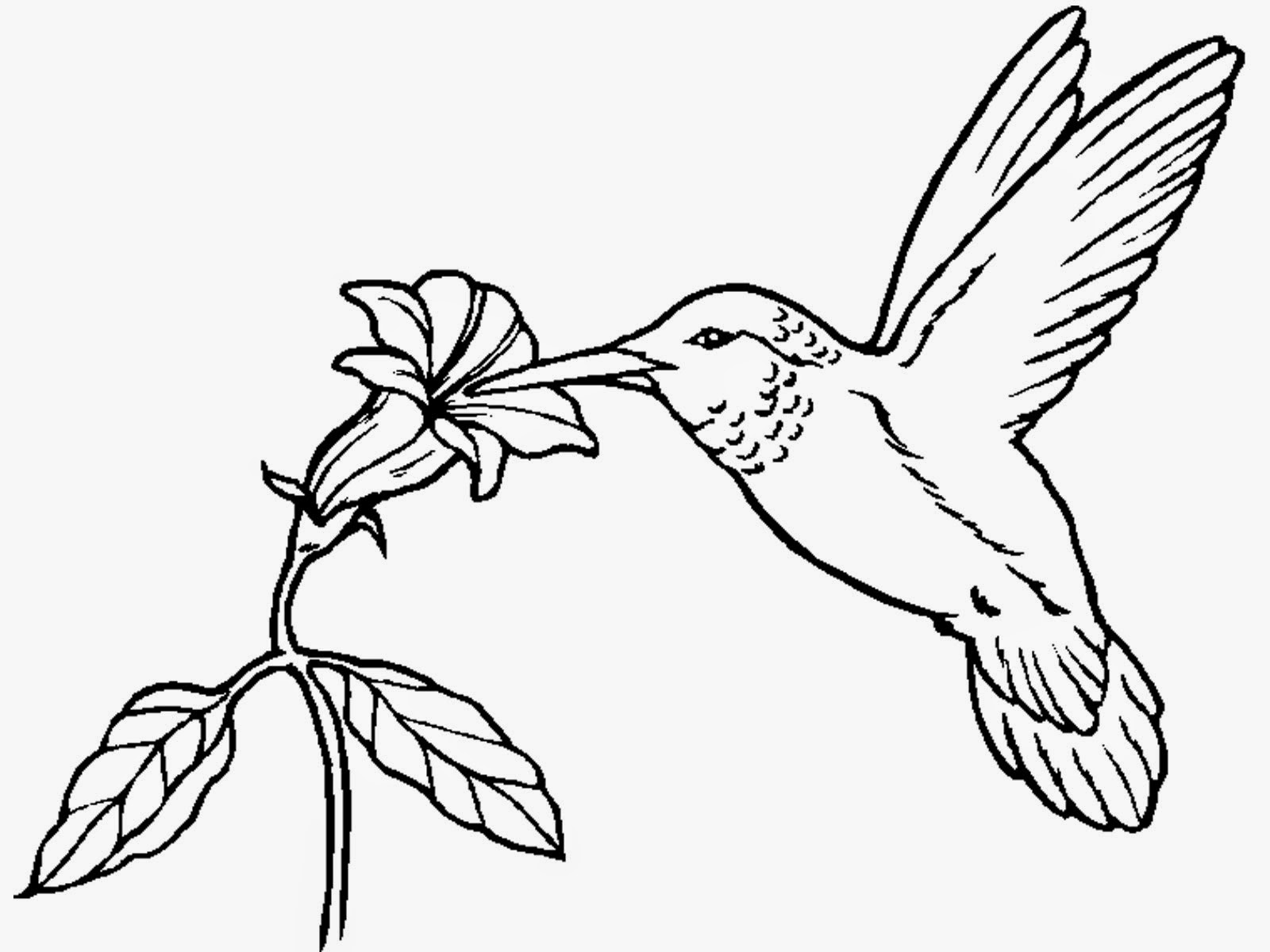 Hummingbird coloring pages for Bird coloring pages to print