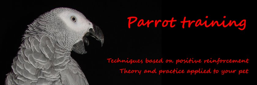 Parrot Clicker Training