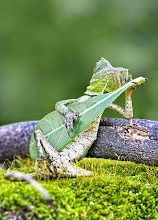 Kadal Main Gitar
