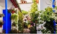 Visita los Patios de Córdoba